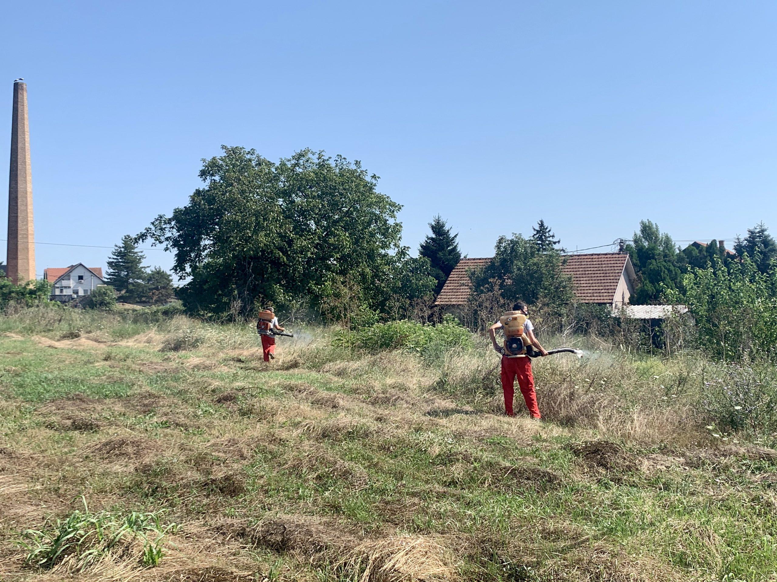 Акција сузбијања амброзије на територији општине Обреновац